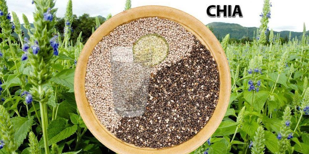 The Chia A Natural Product